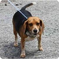 Adopt A Pet :: CC - Toronto/Etobicoke/GTA, ON