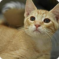 Adopt A Pet :: Meenie - Sacramento, CA
