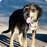 Adopt A Pet :: Chauncy - Albany, NY