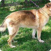 Adopt A Pet :: Aries - Jupiter, FL