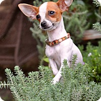Adopt A Pet :: Radar - Austin, TX