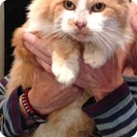Adopt A Pet :: Big Boy - Davis, CA