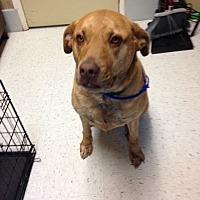 Adopt A Pet :: Luella - Mine Hill, NJ