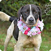 Adopt A Pet :: Speckles - Fort Valley, GA