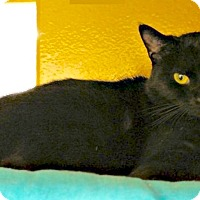 Adopt A Pet :: Candy - Colmar, PA