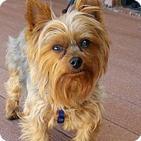 Adopt A Pet :: Prince Carlos - Dayton, OH - Dayton, OH
