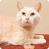 Adopt A Pet :: Crush - Chicago, IL
