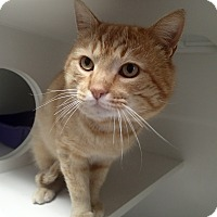 Adopt A Pet :: Nick - Newport, NC