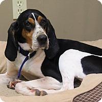 Adopt A Pet :: Ellie Mae - Aurora, IL