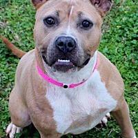 Adopt A Pet :: Baseiji - Covington, TN