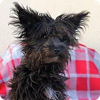 Adopt A Pet :: Smudge - Los Angeles, CA
