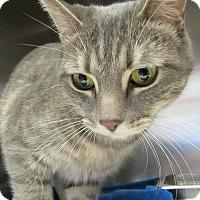 Adopt A Pet :: Boonie - Sierra Vista, AZ