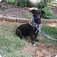 Adopt A Pet :: Buckets - Adamsville, TN