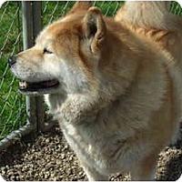 Adopt A Pet :: Nella - Surrey, BC