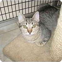 Adopt A Pet :: Evie - Deerfield Beach, FL