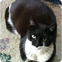Adopt A Pet :: Stretch - Anchorage, AK