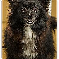 Adopt A Pet :: Jackie - Owensboro, KY