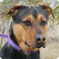 Adopt A Pet :: Kiya - Las Cruces, NM
