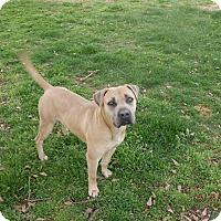 Adopt A Pet :: Max Factor - Homewood, AL