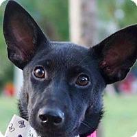 Adopt A Pet :: Sarah - San Ramon, CA