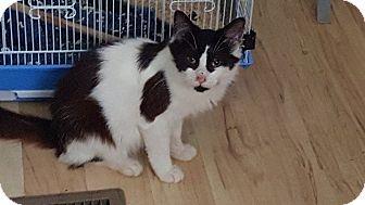 Domestic Mediumhair Cat for adoption in Golsboro, North Carolina - GENERAL