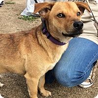 Adopt A Pet :: Fred - San Ysidro, CA