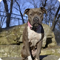 Adopt A Pet :: Cinnamon (Foster or Adopter) - Milwaukee, WI