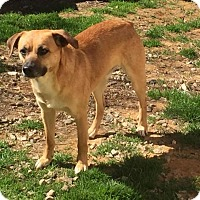 Adopt A Pet :: Dale - Charlotte, NC