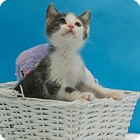 Adopt A Pet :: Conan - Houston, TX