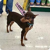 Adopt A Pet :: Liz - Buffalo, NY