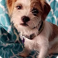 Adopt A Pet :: Frankie - Allentown, PA