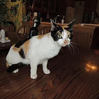 Adopt A Pet :: CALI - Buford, GA
