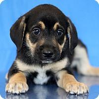 Adopt A Pet :: Mississippi - Waldorf, MD