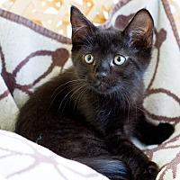Adopt A Pet :: Anastasia - Montclair, CA