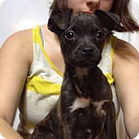 Adopt A Pet :: Branden - Marlton, NJ