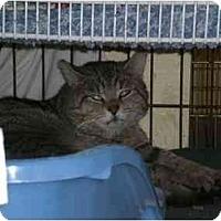 Adopt A Pet :: Grayson - Lombard, IL