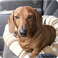 Adopt A Pet :: Tucker - Graham, WA
