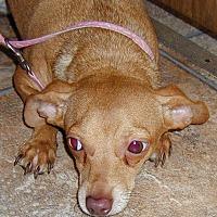 Adopt A Pet :: Peanut - Inman, SC