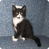 Adopt A Pet :: Bella - Harrisburg, NC