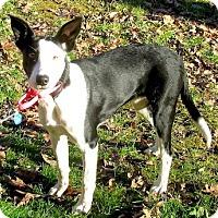 Adopt A Pet :: Darla - Lancaster, PA