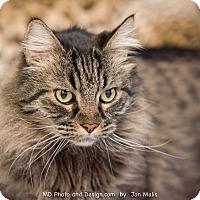 Adopt A Pet :: Rockey - Fountain Hills, AZ