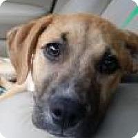 Adopt A Pet :: Virgilee - Alpharetta, GA