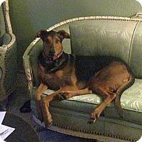 Adopt A Pet :: Puttie - Berkeley, CA