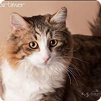 Adopt A Pet :: Mortimer - Gilbert, AZ