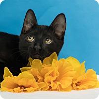 Adopt A Pet :: Hendrix - Houston, TX