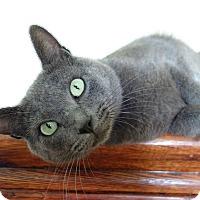 Adopt A Pet :: Willis - Waller, TX