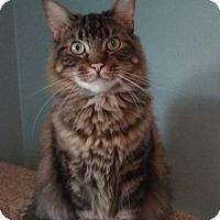 Adopt A Pet :: Logan - Islip, NY