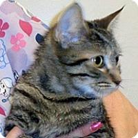 Adopt A Pet :: Espeon - Wildomar, CA