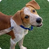 Adopt A Pet :: Hansel - Sarasota, FL