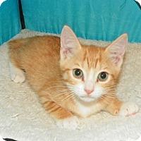Adopt A Pet :: Butter - Fort Pierce, FL